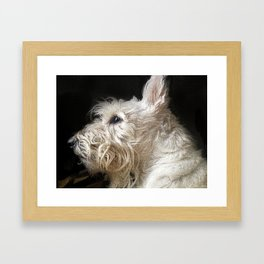 Angus Framed Art Print
