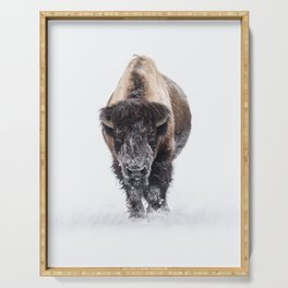 Yellowstone National Park: Lone Bull Bison Serving Tray