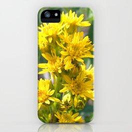 Watercolor Flower, Dwarf Goldenrod 01, Indian Peaks Wilderness, Colorado iPhone Case