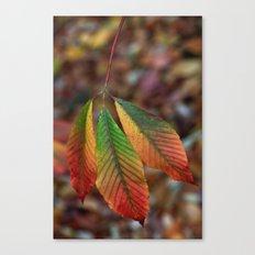 Traffic Light Leaves Canvas Print