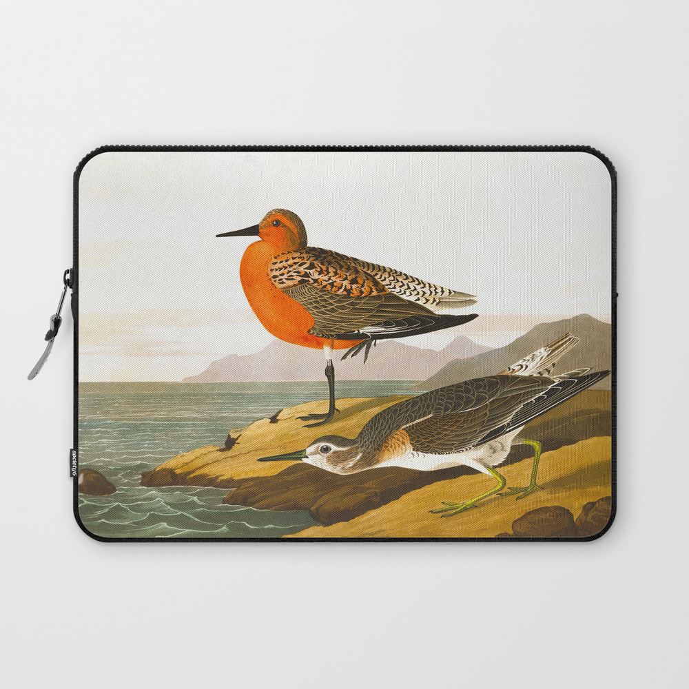 Red-Breasted Sandpiper Bird Laptop Sleeve by enshape (LSV6426465) photo