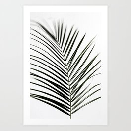 Palm Leaves 7 Art Print