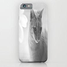 Winford Kitty Slim Case iPhone 6s