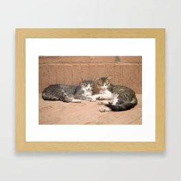 Sleeping Cats Framed Art Print