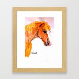 Jacko RDA Pony Framed Art Print