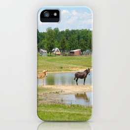 Horses. Animals. Nature Photography. Pennsylvania iPhone Case