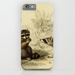 Naturalist Raccoons iPhone Case