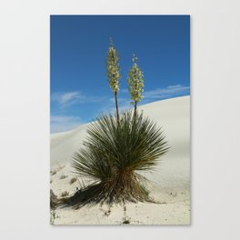 Soap Yucca In The White Sands Dunes Canvas Print