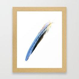 Cobalt Blue Feather: Graphics Framed Art Print