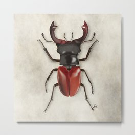 Insect illustration 1 Metal Print