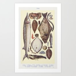 Fish II Crab, Oyster, Eel, Mussel, Lemon Sole, Halibut, Prawn, Sturgeon, Trout, Sprat, Brill, Escallop, Lamprey, Whitebait, from Mrs. Beeton's Book of Household Management Art Print