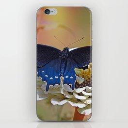 Spicebush Swallowtail iPhone Skin