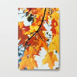 Fall Foliage #2 Metal Print