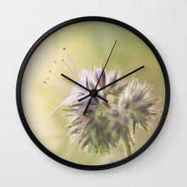 Phacelia Wall Clock