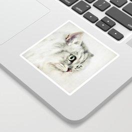 Cat portrait Sticker