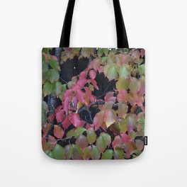 Pretty Fall Dogwood tree leaves Tote Bag