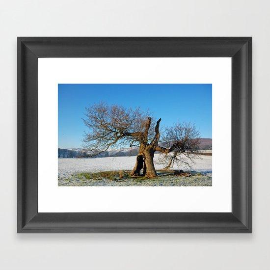 Old Oak Tree in Winter Framed Art Print