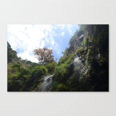 Panamian nature Canvas Print