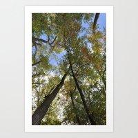 Towering Trees Art Print