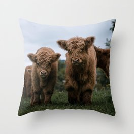Scottish Highland Cattle Calves - Babies playing II Throw Pillow