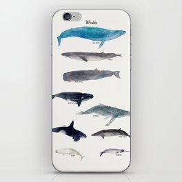 whales iPhone Skin