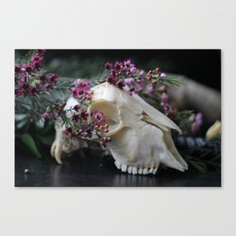 Sheep Skull I Canvas Print