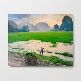 Paddy Fields Sunset Fine Art Print  • Travel Photography • Wall Art Metal Print