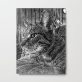 House Cat, Spart, 2017 Metal Print