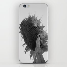 drooping sunflower iPhone Skin