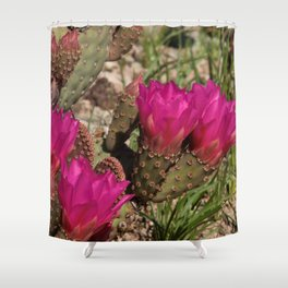 Beavertail Cactus in Bloom - II Shower Curtain