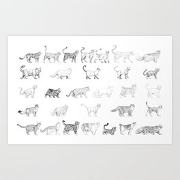 Breeds of cats Art Print