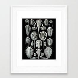 Trilobites and Fossils by Ernst Haeckel Framed Art Print