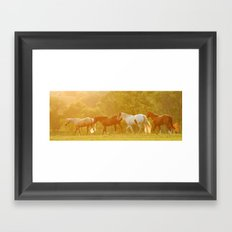 Horses @ Sunset Framed Art Print