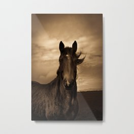 English horse in sepia tones Metal Print