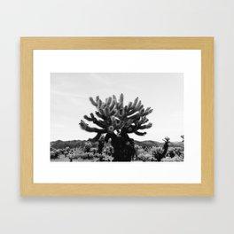 Cholla Cactus Garden XI Framed Art Print