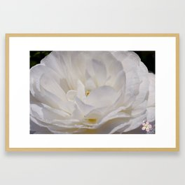 Simply White & Beautiful Flower by Aloha Kea Photography Framed Art Print