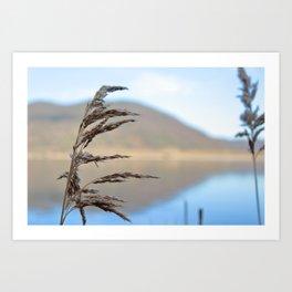 lake and flora Art Print