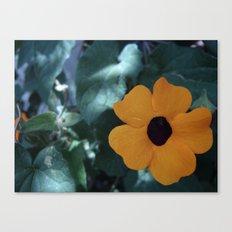 Flowers #7 Canvas Print
