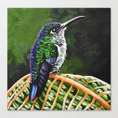 Many Spotted Hummingbird Canvas Print