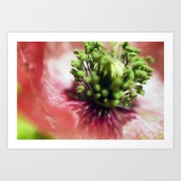 Mother of Pearl Poppy Art Print