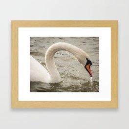 Dripping Swan Framed Art Print