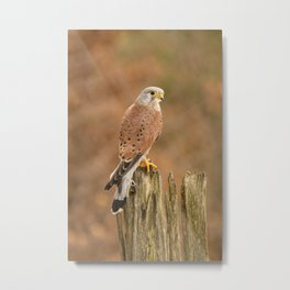 Perched Raptor Metal Print