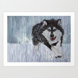 Husky Running Art Print