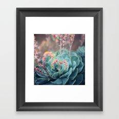 Echeveria #1 Framed Art Print