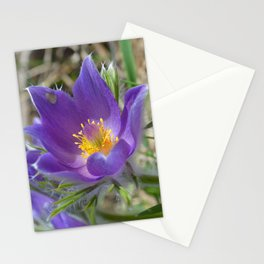 Purple Pasqueflower  Stationery Cards