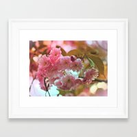 cherry blossoms Framed Art Prints featuring Cherry Blossoms by Judy Palkimas