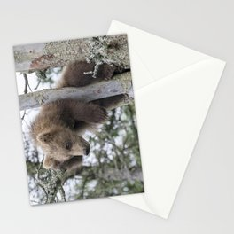 Baby Grizzly Bear (Cub) in Tree Stationery Cards
