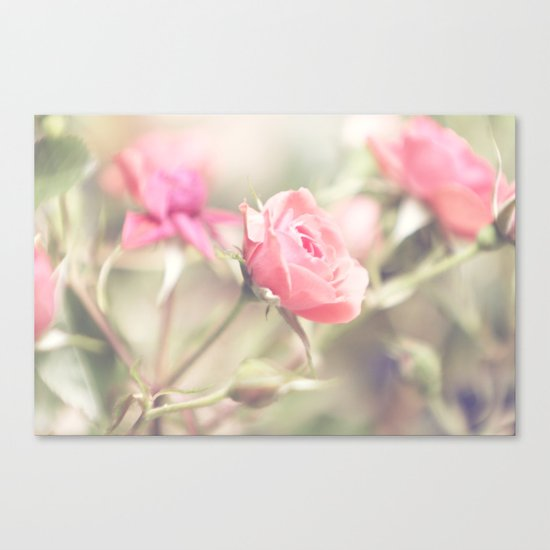 Kiss from a rose Canvas Print