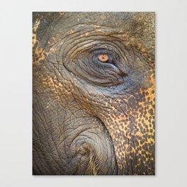 Close-up Elephant eye Canvas Print