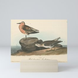 Vintage Print - Birds of America (1840) - Red-Breasted Sandpiper Mini Art Print